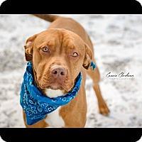 Adopt A Pet :: Nicholas - Urgent! - Zanesville, OH