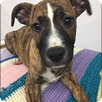 Adopt A Pet :: Galaxy - Toledo, OH