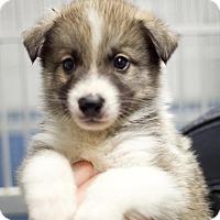 Adopt A Pet :: Coal - Canyon Country, CA