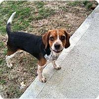 Adopt A Pet :: Susie - Hilliard, OH