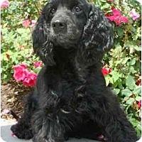 Adopt A Pet :: Grover - Sugarland, TX