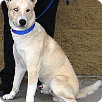 Adopt A Pet :: Teddy - Gilbert, AZ