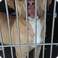 Adopt A Pet :: Timmy URGENT - San Diego, CA