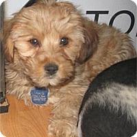 Adopt A Pet :: Skeeter - Golden Valley, AZ