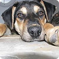 Adopt A Pet :: Roxy - Saskatoon, SK