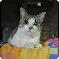 Adopt A Pet :: Tatiana - Pasadena, CA