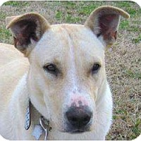 Adopt A Pet :: Waggs 2 - P, ME
