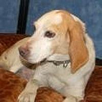 Adopt A Pet :: Rodney - Stafford, VA