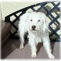 Adopt A Pet :: Blanca - Las Vegas, NV