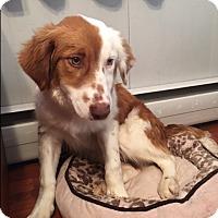 Adopt A Pet :: Hendon - New Oxford, PA