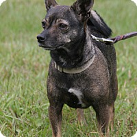 Adopt A Pet :: Leali - North Fort Myers, FL