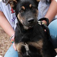 Adopt A Pet :: Kit - Morganville, NJ
