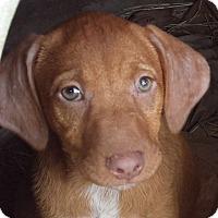 Adopt A Pet :: Ruby - Preston, CT