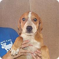 Adopt A Pet :: Zoe - Oviedo, FL