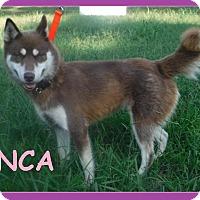 Adopt A Pet :: Inca - Batesville, AR
