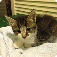 Adopt A Pet :: Mystic - Asheboro, NC