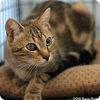 Adopt A Pet :: Bert - Bedford, VA