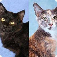 Adopt A Pet :: Xachary & Xola (Bonded Pair) - Encinitas, CA