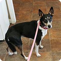 Adopt A Pet :: Dean - Lisbon, OH