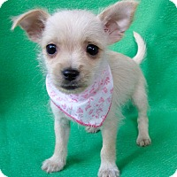 Adopt A Pet :: Marilyn - Irvine, CA