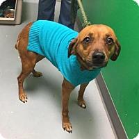 Adopt A Pet :: Fiona - Erwin, TN