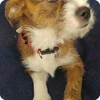 Adopt A Pet :: Annie - Johnson City, TN