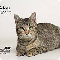 Adopt A Pet :: Selena - Baton Rouge, LA