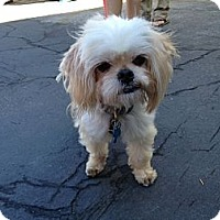 Adopt A Pet :: Muppy - Los Angeles, CA