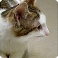 Adopt A Pet :: Greg - Chicago, IL