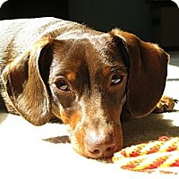 Adopt A Pet :: TOPHER - Portland, OR