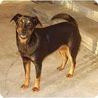 Adopt A Pet :: Sara Leigh - Fort Lauderdale, FL