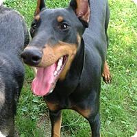 Adopt A Pet :: Zoe - Caledon, ON