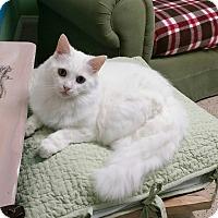 Adopt A Pet :: Coleen - Naples, FL