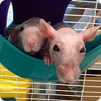 Adopt A Pet :: BABE and RUTH - Philadelphia, PA