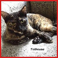 Adopt A Pet :: Tollhouse - Miami, FL