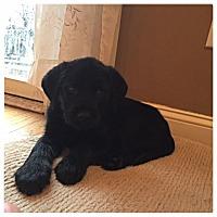 Adopt A Pet :: Zander - New Oxford, PA