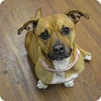 Adopt A Pet :: Kindel - Lake Odessa, MI
