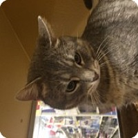 Adopt A Pet :: Dante - McHenry, IL