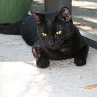 Adopt A Pet :: Winston - Bonita Springs, FL