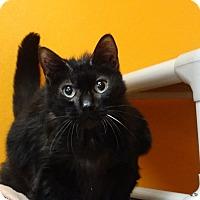 Adopt A Pet :: Reba - Elyria, OH