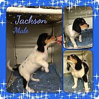 Adopt A Pet :: Jackson meet me 5/27 - Manchester, CT