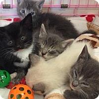 Adopt A Pet :: Derek $125 - Seneca, SC