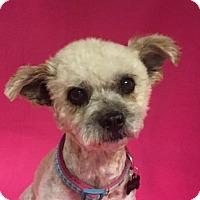 Adopt A Pet :: Wanda - Alta Loma, CA