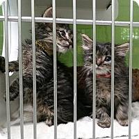 Adopt A Pet :: Cindy Lou - Muskegon, MI
