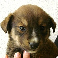 Adopt A Pet :: Millard - Erwin, TN