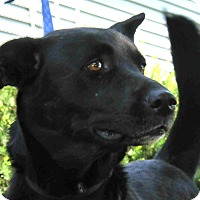 Adopt A Pet :: Angie - St. Charles, IL