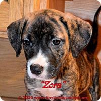 Adopt A Pet :: Zora - Simi Valley, CA