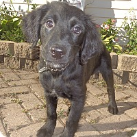Adopt A Pet :: Reyn - West Chicago, IL