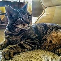 Adopt A Pet :: Gramps - Alexandria, VA