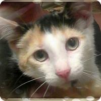 Adopt A Pet :: Ida Lee - Trevose, PA